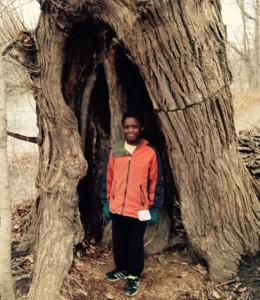 Armon tree (2)