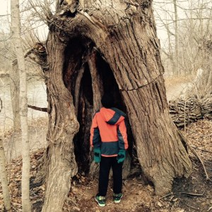 Tree Armon