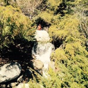 Dow Gardens Falls
