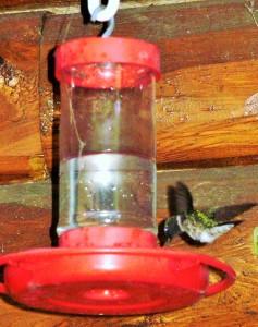 Bird, Humming bird (2)